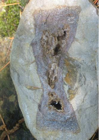 fossile 2
